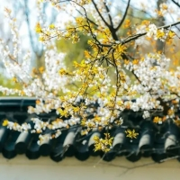 人间仙境,看一看宿迁的春光美景!宿迁春夏旅游攻略大全